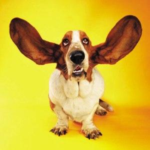 """I'm all ears!"""