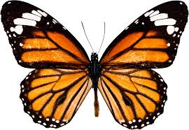 Not every caterpillar becomes a butterfly, but every butterfly was once a caterpillar.
